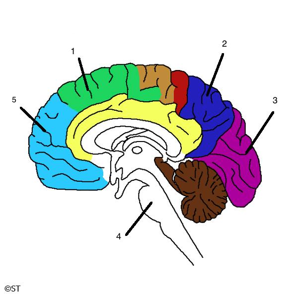 brain-numbers